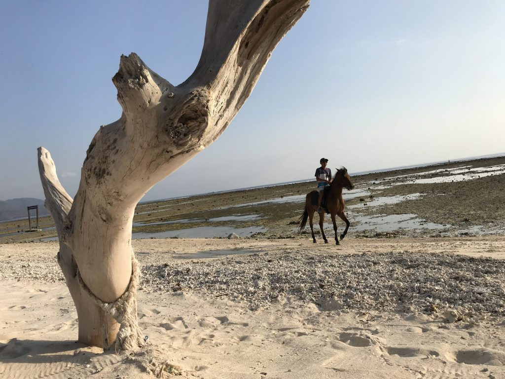 Gili T on horseback